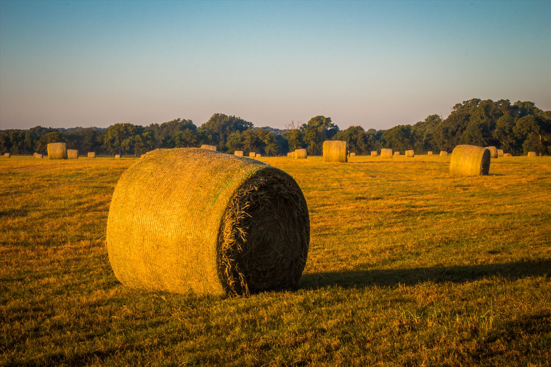 20170819_Hay Field_022.jpg -  by Charles Smith Photography